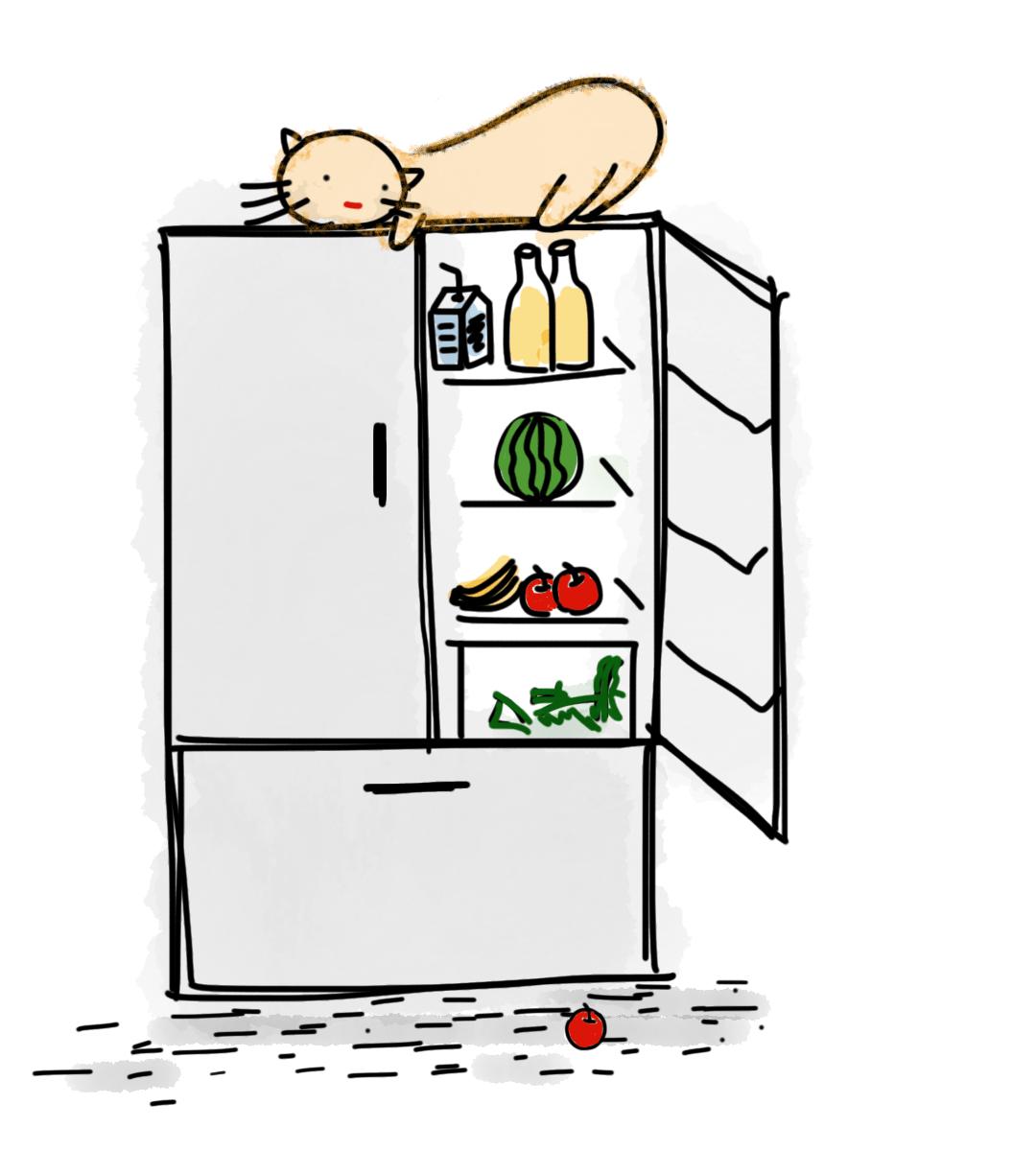 кошка на холодильнике